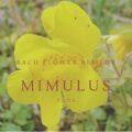 【バッチフラワーレメディ】ミムラス(具体的な怖れ<静かな勇気)の特徴と詳細のレッスン